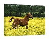 Easy Art Prints Adam Jones's 'Arabian Foal Mare' Premium Canvas Art - 16'' x 24''