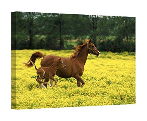 Easy Art Prints Adam Jones's 'Arabian Foal Mare' Premium Canvas Art - 16'' x 24'' by Easy Art Prints