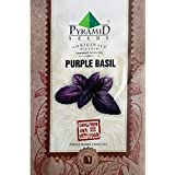 Pyramid Purple Basil Herb Seeds (1000 Seeds)