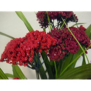 "Phoenix Silk Queen Anne's Lace Bush 10 Artificial Flowers 18"" Bouquet 980 RED BURGUNDY 1"