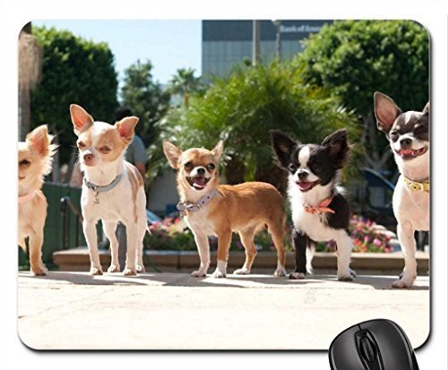 Mexican wolf pack in beverly hills. Mouse Pad, Mousepad (Dogs Mouse Pad)