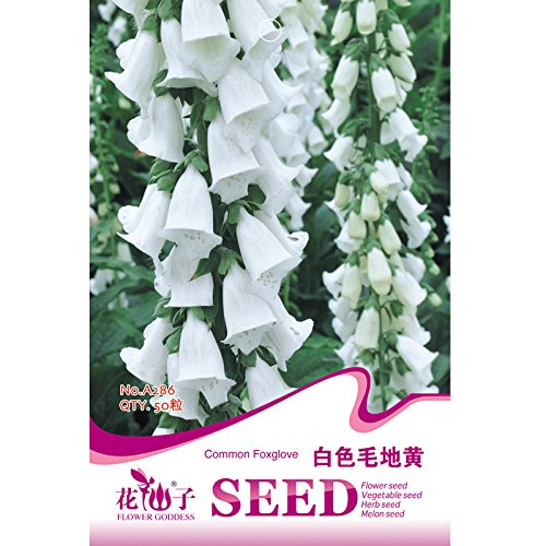 (2018 Hot Sale Davitu White Foxglove Digitalis purpurea Perennial Flower Seeds, 50 Seeds, Original Pack, Perennial Root Herbs Plants)