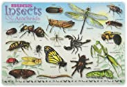 PAINLESS LEARNING PLACEMATS-Bugs, Insects and Arachnids-Placemat