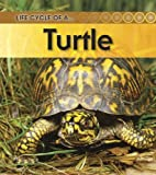 Turtle, Ron Fridell and Patricia Walsh, 1432925490