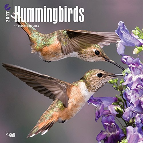 2017 Monthly Wall Calendar - Hummingbirds
