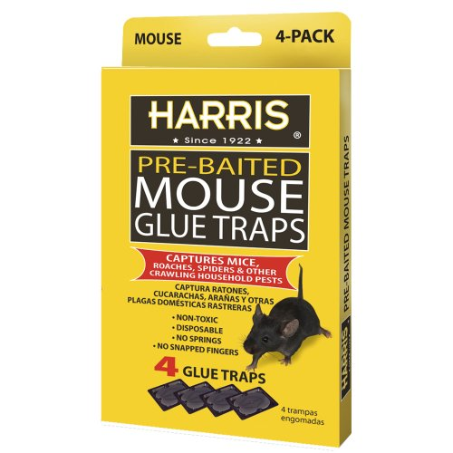 Harris Pre-Baited Mouse Glue Traps, Non-Toxic and Fully Disposable (4-Pack)