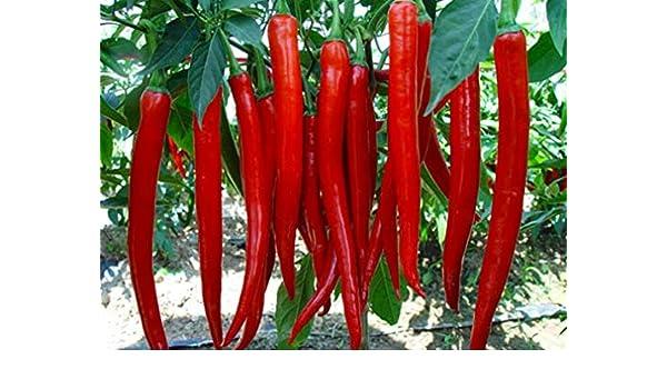 Heirloom 400PCS Hot Birds Eye Chili Pepper Capsicum Vegetable Seeds Home Garden