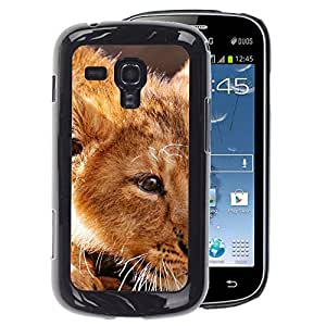 A-type Arte & diseño plástico duro Fundas Cover Cubre Hard Case Cover para Samsung Galaxy S Duos S7562 (Ginger Lion Cub Cute African King Animal)