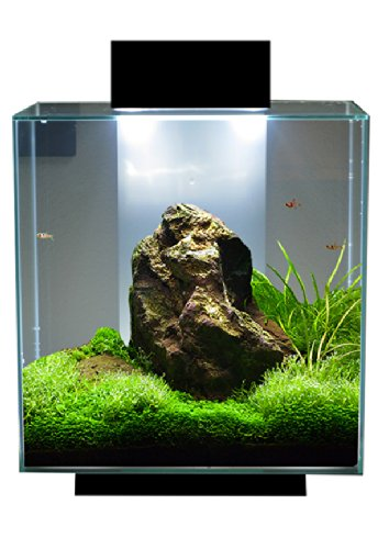 Lovely Fluval Edge 18 Watt Ultrabrite Led System Upgrade Planted Tank