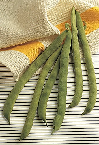 Burpee Kentucky Wonder Pole Bean Seeds 8 ounces of seed by Burpee (Image #2)