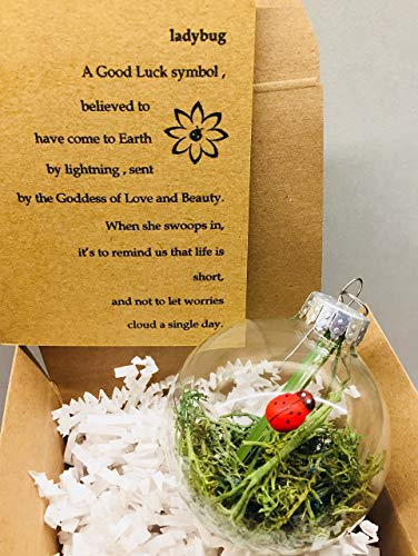 Lucky Ladybug Habitat Glass Globe Ornament and Lady Bug Quote Card Gift Boxed by Dorinta ()