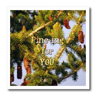3dRose Jos Fauxtographee- Pine Tree - Pining for you written over a Pine Tree in PV UT - 8x8 Iron on Heat Transfer for White Material (ht_255943_1)