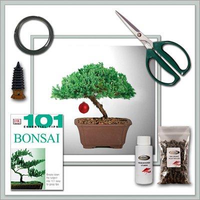 Bonsai Tree Juniper