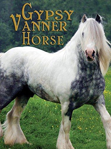 Gypsy Vanner Horse - Flying New Horse