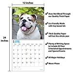 2020 Bulldogs Wall Calendar by Bright Day, 16 Month 12 x 12 Inch, Cute Dogs Puppy Animals English British 13