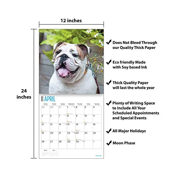 2020 Bulldogs Wall Calendar by Bright Day, 16 Month 12 x 12 Inch, Cute Dogs Puppy Animals English British 4