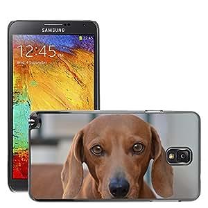 Etui Housse Coque de Protection Cover Rigide pour // M00113411 Perro mirada canina Animal Pet // Samsung Galaxy Note 3 III N9000 N9002 N9005