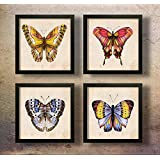 SAF Set of 4 Butterfly Digital Reprint 19 inch x 19 inch Painting ()