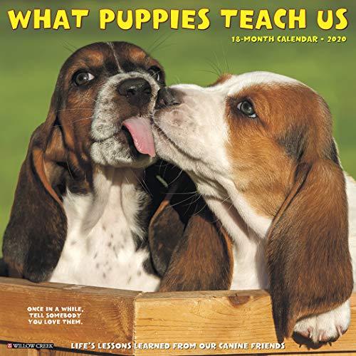 What Puppies Teach Us 2020 Wall Calendar