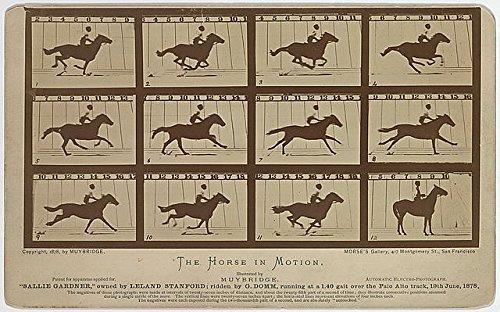 Infinite Photographs Photo: The Horse in Motion,Animal Locomotion,Eadweard Muybridge,Motion Study,c1878