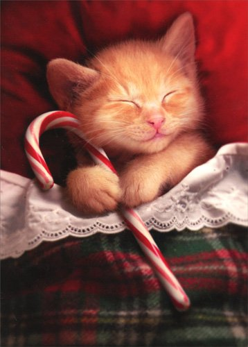 Kitten Christmas.Sleeping Kitten Holding Candy Cane Avanti Cat Box Of 10 Christmas Cards