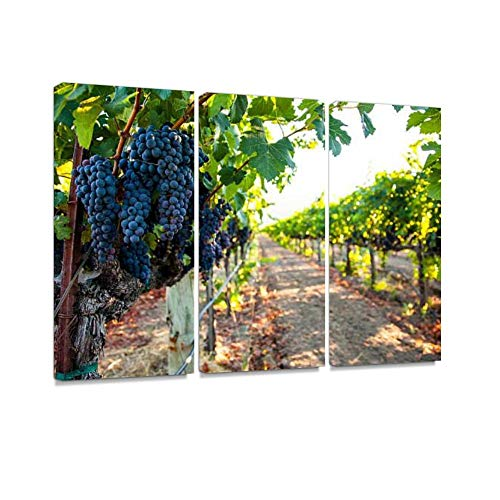 Sauvignon Napa Valley - Napa Valley Grape Cluster Print On Canvas Wall Artwork Modern Photography Home Decor Unique Pattern Stretched and Framed 3 Piece