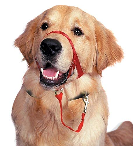 (Barkless Dog Head Collar, No Pull Training Tool for Dogs on Walks, Includes Free Training Guide, 5 (M, Red))