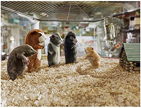 G Force Speckles Darwin Juarez Blaster Bucky Grouped In Cage 8 X 10 Inch Photo At Amazon S Entertainment Collectibles Store