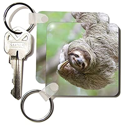 3Drose Brown-Throated Sloth Wildlife, Corcovado Costa Rica - Sa22 Jgs0017 - Jim Goldstein - Key Chains, 2.25 X 4.5 Inches, Set Of 6 (Kc_87171_3) - 6