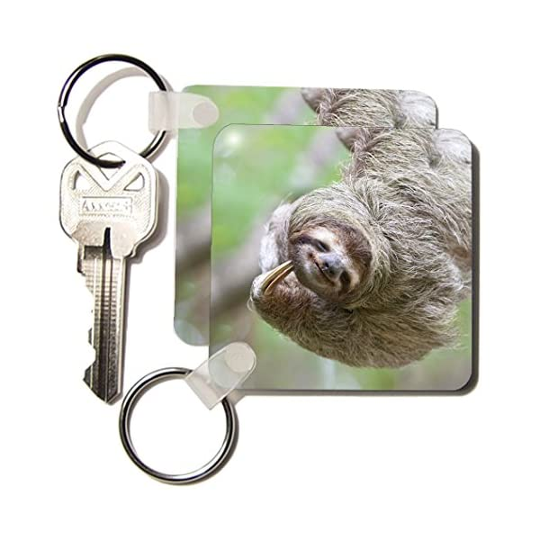 3Drose Brown-Throated Sloth Wildlife, Corcovado Costa Rica - Sa22 Jgs0017 - Jim Goldstein - Key Chains, 2.25 X 4.5 Inches, Set Of 6 (Kc_87171_3) -