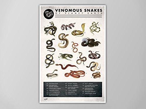 Snake Chart Art Print, Snake Chart Natural History Poster, Natural History Scientific Print, Snake