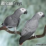 African Grey Calendar - African Grey Parrot Calendar - Parrot Calendar - Calendars 2017 - 2018 Wall Calendars - Bird Calendars - Monthly Wall Calendar by Avonside