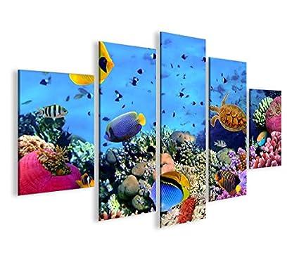 De Imágenes sobre lienzo Acuario Peces Mar Agua Doktor peces tropicales MF XXL Póster Lienzo Cuadro