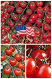 Sweet Million Cherry Tomato (Organic) Tomato 150 Seeds By...