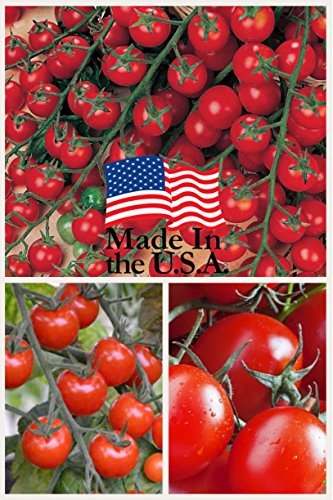 Sweet Million Cherry Tomato (Organic) Tomato 150 Seeds By Jays Seeds Upc 643451295290 (Indeterminate Tomato Plants)