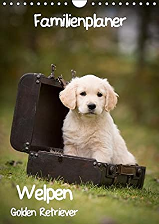 Amazon Com Familienplaner Golden Retriever Welpen Wandkalender