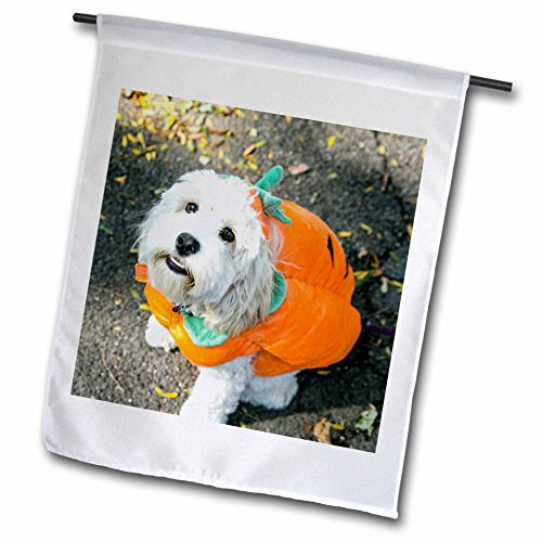 Danita Delimont - Halloween - Pet Halloween contest at Thompkins Square Park, New York City. - 18 x 27 inch Garden Flag (Halloween Costume Photo Contest)