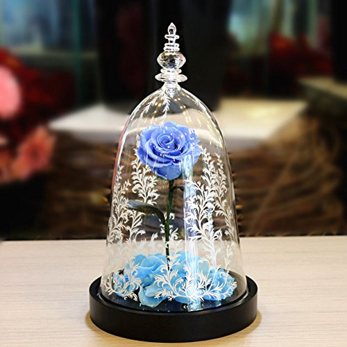 Eternal rose,Flowers The beauty and the beast Glass ornaments Light Christmas day Birthday Decoration Send to your girl friend-D 16x28cm(6x11inch) by Only rose