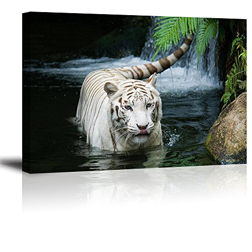 White Tiger Picture Decor for Bedroom, PIY Gorgeous Wall Art of Ivory Tigress in Pond, Wild Life Theme Canvas Painting Prints on Canvas (1'' Thick, Waterproof Artwork, Bracket Mounted Ready to Hang) by Piy Painting