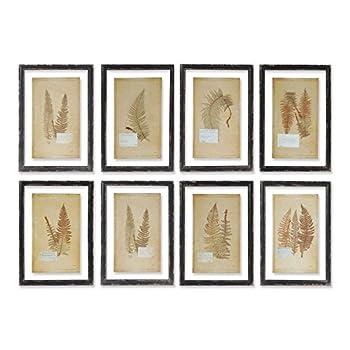 Framed Vintage Fern Prints, Set of 8