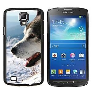 YiPhone /// Prima de resorte delgada de la cubierta del caso de Shell Armor - Siberian Husky de Alaska Malamute Perro Invierno - Samsung Galaxy S4 Active i9295