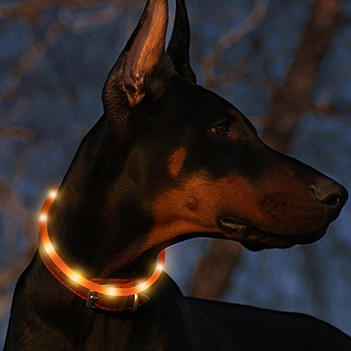 Led Dog Collar USB Rechargeable Glowing Pet Safety Collars Water Resistant Light up Improved Dog Visibility & Safety Adjustable Flashing Collar for Dogs 6 Stylish Colors by Bseen (Orange)