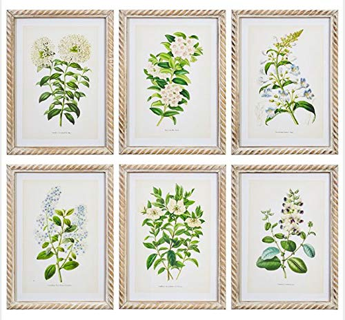 Green Floral Botanical Study Framed Prints - 6-Piece Wall Art Set