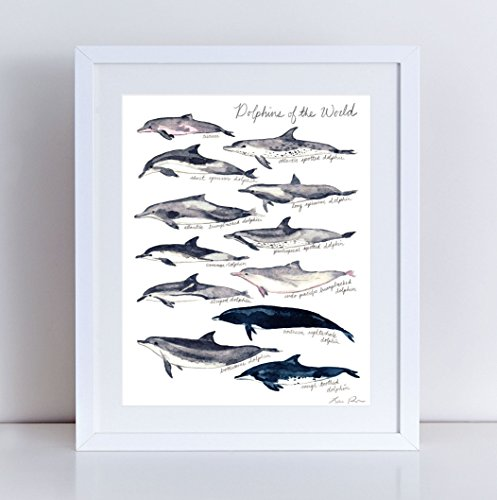 (Dolphins of the World Giclee Art Print Watercolor Painting Wall Home Decor Whale Nautical Nursery Ocean Kids Dolphin Poster Coastal Style Sea Creatures Life Biology Animals)
