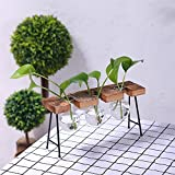 Transparent Glass Vase with Wooden & Iron Stand for Water Planting Decoration Gift (Three vases)
