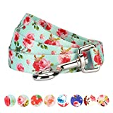 Blueberry Pet Durable Spring Scent Inspired Floral Rose Print Turquoise Dog Leash 5 ft x 5/8'', Small, Leashes for Dogs