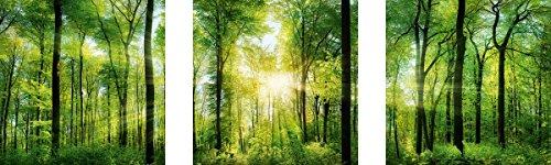 Цвет: Зеленый sunshine