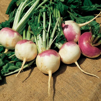 Turnip Purple Top White Globe USDA Certified Organic Vegetable Seed - 10,000 seeds