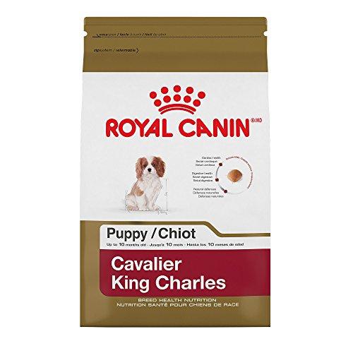 Cavalier King Charles Breed (Royal Canin 510303 Breed Health Nutrition Cavalier King Charles Puppy Dry Dog Food, 3  lb)