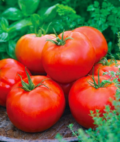 200+ Big Boy Hybrid Tomato Seeds - My Secret Gardens - UPC777791728023